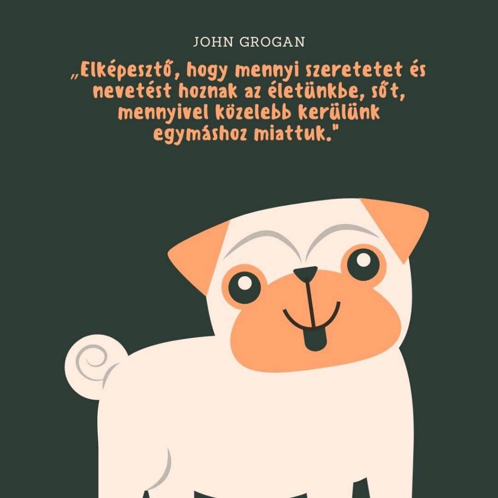Kutya idézetek szeretet