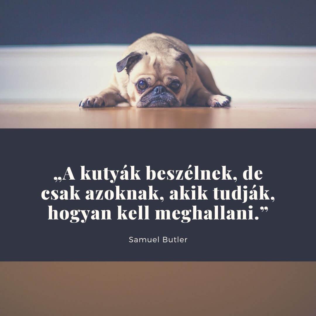 kutya idézetek